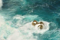 Reven i havet Royaltyfri Bild
