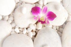 Rever blanco de la roca con la orquídea Fotografía de archivo libre de regalías