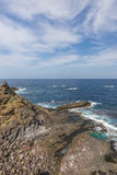 Rever i havet Arkivfoto