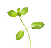 Reverse of peppermint twig Royalty Free Stock Photo