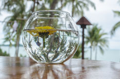 Reverse reflection Royalty Free Stock Images