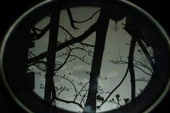 Dark nature reflection stock photo