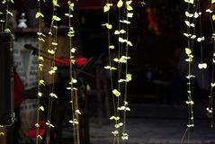 Reversible light plant. ,Dark background,Beautiful lines Royalty Free Stock Photos