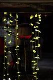 Reversible light plant. ,Dark background,Beautiful lines Royalty Free Stock Image