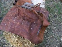 Revestimento de couro medieval Imagem de Stock