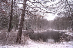 Revestimento do inverno Fotos de Stock
