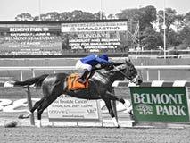Revestimentos de excitação em Belmont Park foto de stock royalty free