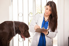 Reviewing medical history of a dog stock photo