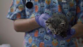 Revise el control un pequeño gatito en sus brazos almacen de video