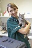 Revise el gato de la explotación agrícola en cirugía foto de archivo