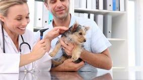 Revise la comprobación de un terrier de Yorkshire con su dueño almacen de metraje de vídeo