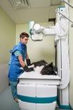 Revise sacar la radiografía de un perro Foto de archivo libre de regalías