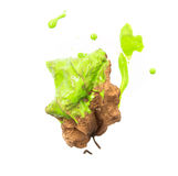 Revive for nature. Painting green ink into dry leaf Stock Images