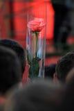 Revolution av röda rosor royaltyfri fotografi