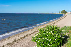Rewa beach. Small beach with green plants in Rewa, Poland Royalty Free Stock Image