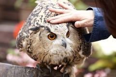 Reward to an owl Royalty Free Stock Photos