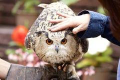 Reward to an owl. Stock Photo