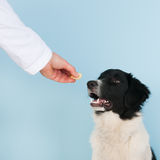Reward from the veterinarian Stock Images