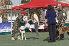 Rewarding of the participants of the dog shows - instructors, shepherd-malinois and Labrador. Royalty Free Stock Photos