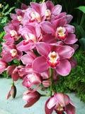 Rewolucjonistek Różowy Biały kontur textured orchidee obrazy royalty free