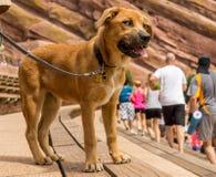 Rewolucjonistek skały - Szczęśliwy pies fotografia stock