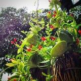 Rewolucjonistka dom z czerwonym kwiatem Obrazy Royalty Free