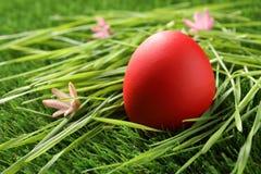 Rewolucjonistka farbujący Wielkanocny jajko na zielonej trawie fotografia stock