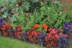 Rewolucjonistka i Błękitni kwiaty w Luksemburg ogródzie Fotografia Stock