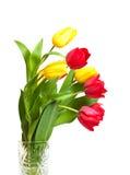 Rewolucjonistka i kolor żółty tulipany Obrazy Royalty Free