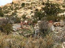 Rewolucjonistka jaru konserwaci Rockowy teren, Nevada, usa obraz royalty free