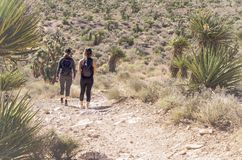 Rewolucjonistka jaru parka narodowego skały jaru Rockowy park narodowy Zdjęcie Stock