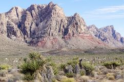 Rewolucjonistka jaru Rockowy park narodowy, Nevada Obrazy Royalty Free