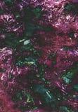 Rewolucjonistka, jedzenie, burak, tekstura ogrodowa, zdrowy, tło, zbliżenie, Zdjęcia Royalty Free