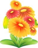 Rewolucjonistka, kolor żółty, GreenGarden kwiatu wektor na białym tle Fotografia Royalty Free