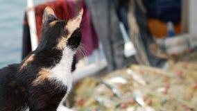 Rewolucjonistka kot ogląda rybaka który bierze rybiego chwyta od sieci W porcie Bodrum, Turcja zbiory