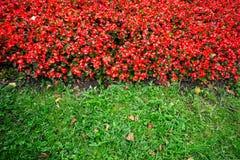 Rewolucjonistka kwiaty i zielona trawa Fotografia Stock