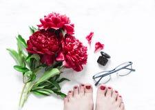 Rewolucjonistka kwitnie peonie, piękni żeńscy cieki z czerwonym pedicure'em, szkła, pachnidło na lekkim tle, odgórny widok tła pi zdjęcie royalty free