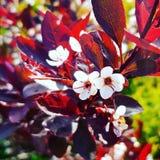 Rewolucjonistka liście i biali kwiaty fotografia stock