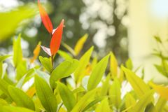 Rewolucjonistka opuszcza po środku zielonych liści dla tła ro wallp Zdjęcie Stock