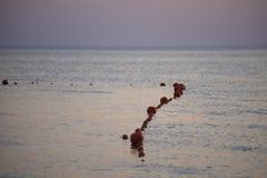 Rewolucjonistka pociesza w morzu na plaży w wieczór przy zmierzchem zdjęcie stock