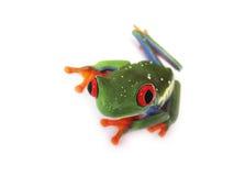 Rewolucjonistka przyglądał się drzewnej żaby Agalychnis callidryas, (81) Zdjęcia Stock