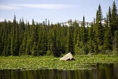 Rewolucjonistka Rockowy jezioro wzdłuż szczytu Osiągać szczyt autostradę w Kolorado zdjęcia stock