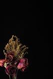 Rewolucjonistka suszący róży zakończenie up zdjęcie royalty free