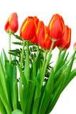 Rewolucjonistka z żółtymi tulipanami fotografia stock
