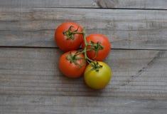 Rewolucjonistka zieleni pomidory Zdjęcie Royalty Free
