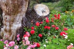Rewolucjonistki i menchii róże z wildflowers Obraz Stock