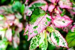 Rewolucjonistki i zieleni liść, natury tło Zdjęcia Stock