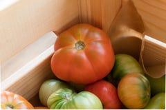 Rewolucjonistki i zieleni pomidory na drewnianym tle Pomidorowy żniwo obrazy royalty free