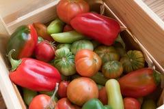 Rewolucjonistki i zieleni pomidory na drewnianym tle Pomidorowy żniwo zdjęcia stock