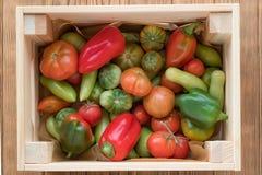 Rewolucjonistki i zieleni pomidory na drewnianym tle Pomidorowy żniwo zdjęcia royalty free